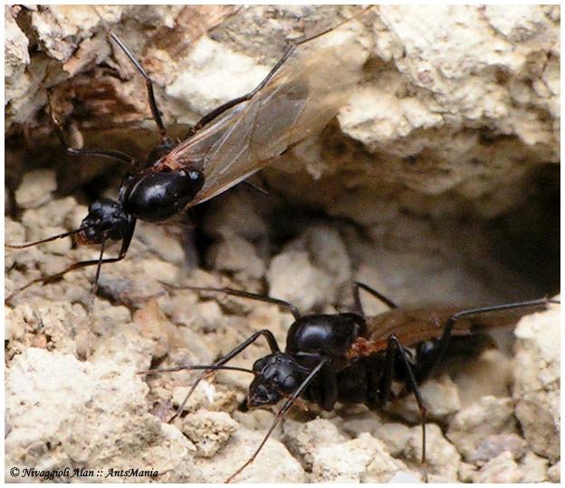 trouver un nid de fourmis